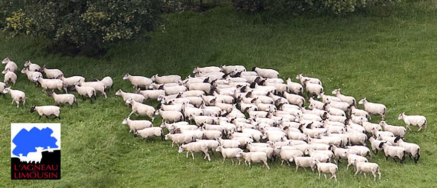 http://valkviande.nl/uploads/images/Header/foto-header-agneau3.jpg